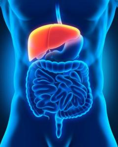 Gastroenterologen bezeichnen die bösartige Erkrankung der Leber als Leberkrebs