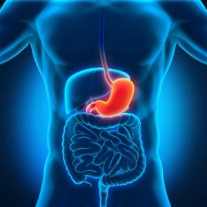 Der Magen befindet sich unterhalb der Speiseröhre
